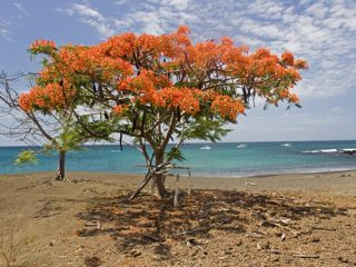 Cruceros Baltra, Galápagos