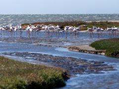 Croisières Walvis Bay