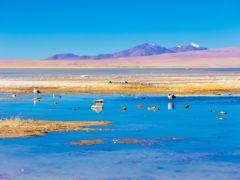 Crociere Antofagasta